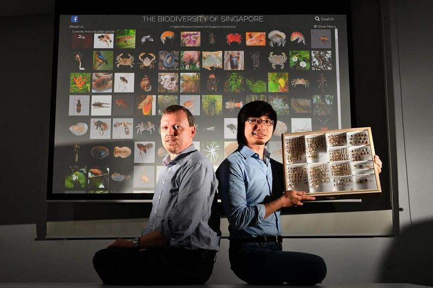 Ang Yuchen (right) Museum Officer, Lee Kong Chian Natural History Museum, holding specimens of fly species featured on the Biodiversity of Singapore, and Rudolf Meier, Deputy Head, Lee Kong Chian Natural History Museum, in front of projection of the