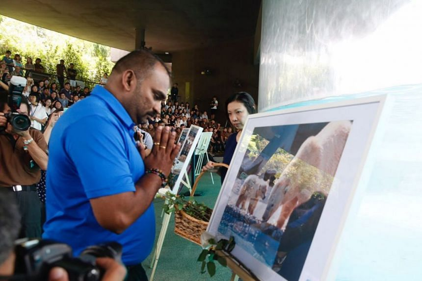 A private tribute ceremony for Inuka was held on April 26 at the Frozen Tundra in the Singapore Zoo.