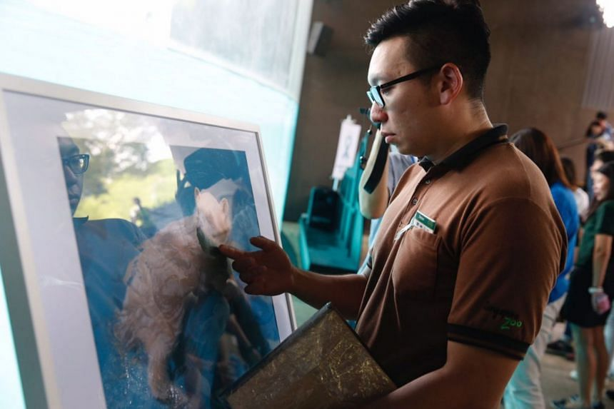 An emotional zoo staff member touching a picture of Inuka at the Frozen Tundra in the Singapore Zoo.
