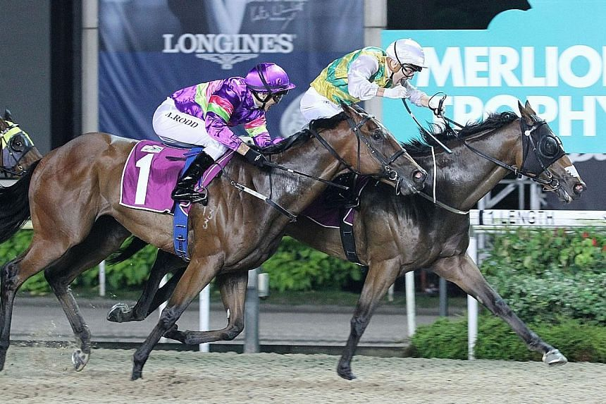 Distinctive Darci getting up on the inside to beat Countofmontecristo in the $500,000 Merlion Trophy in Race 6 at Kranji last night.