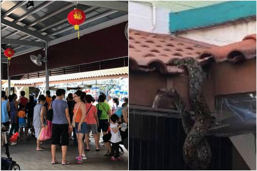 """A video posted by Facebook user Sunny Rajah shows the large snake coiled in the eaves of a roof. Mr Rajah later posted a photo of the crowd of about 30 to 40 people, """"all waiting for the snake to come out""""."""