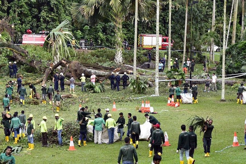Madam Angara, 38, was attending an outdoor concert near the Shaw Foundation Symphony Stage at around 4.30pm on Feb 11 last year when the 40m-tall heritage tree came crashing down.