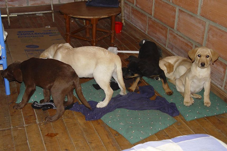Puppies in a room on May 1, 2018, after they were rescured when drugs were found in them.