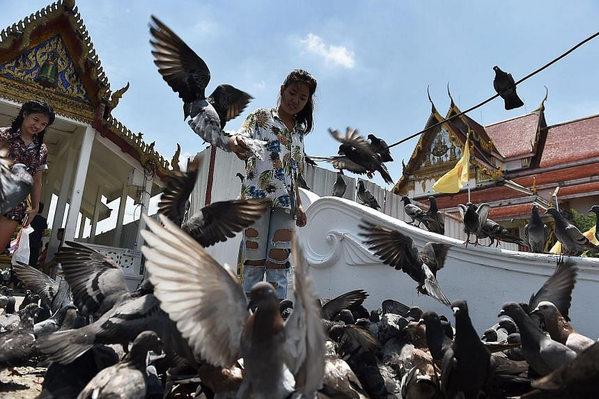 Pigeons at Bangkok's Wat Rakang Temple. In Lop Buri, two hours north of the Thai capital, the birds were a nuisance and defecated on government offices, historical sites, temples and houses while ravaging local crops, said Mr Plaek Thepparak, the hig
