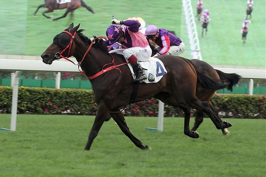 Last-start winner Prawn Baba appeals in tomorrow's Group 3 Queen Mother Memorial Cup in Race 4 at Sha Tin with a light weight.