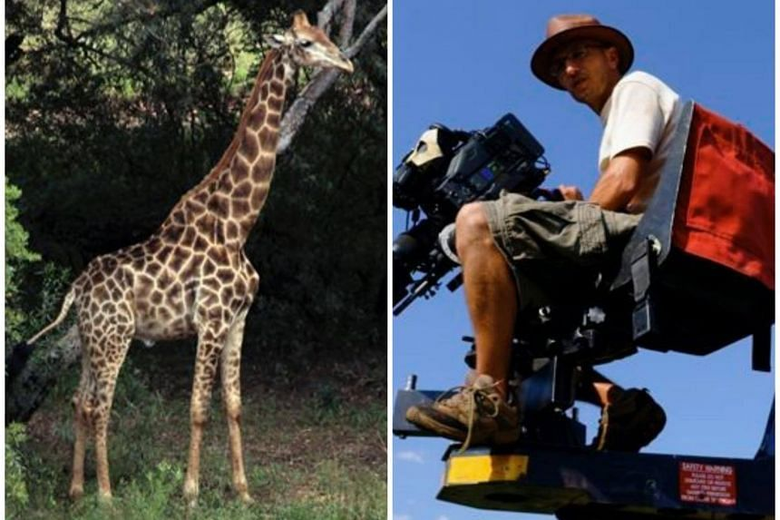 Award-winning South African cinematographer Carlos Carvalho was head-butted by the giraffe at a safari lodge while shooting a feature film.