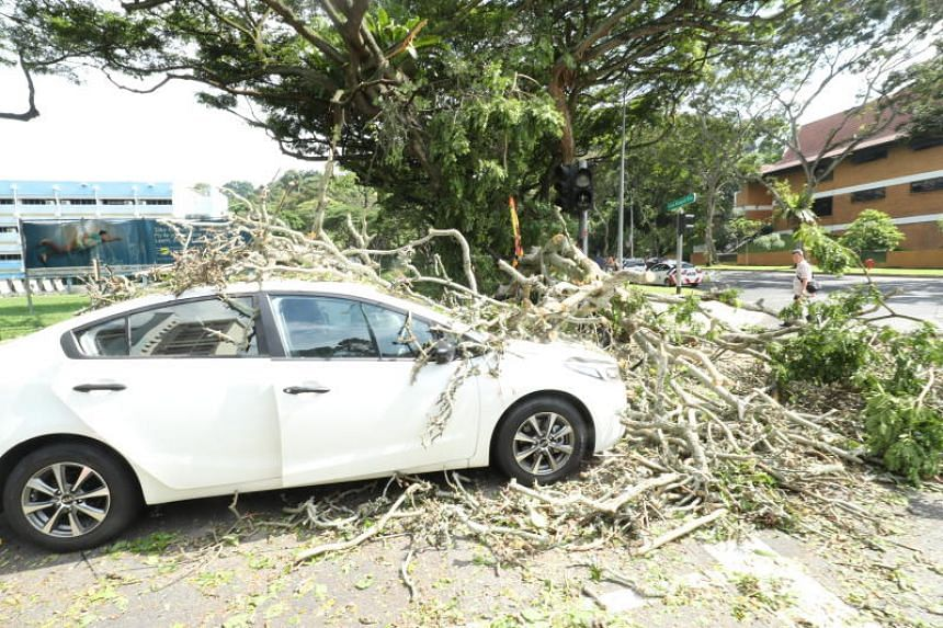 A car travelling along Telok Blangah Crescent was hit by a falling tree on May 5, 2018.