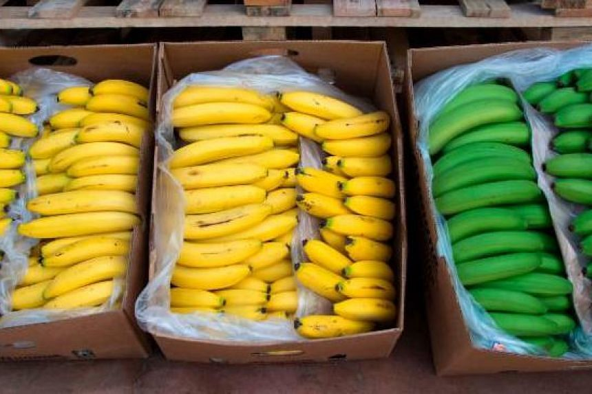 British student Dane Nash, who's on a fruitarian diet, said he ate more than 100 bananas a week.