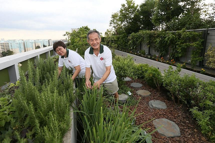 Civil servant Doris Yuen, 59, and her retiree husband Yip Keng Luen, 72, at the rooftop community garden in the 11-storey Kampung Admiralty. Other facilities in this HDB project include a medical centre and a sheltered plaza for community activities