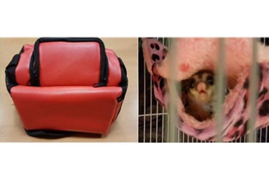Red sling pouch carried by the offender containing the live sugar glider.
