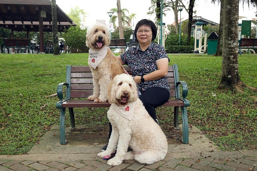 Dr Josephine Yong with her dogs King (left) and Johnny Cupcake. Both dogs have been donating blood for the past two years. With no commercial animal blood bank here, there is a need to grow a pool of regular blood donors.