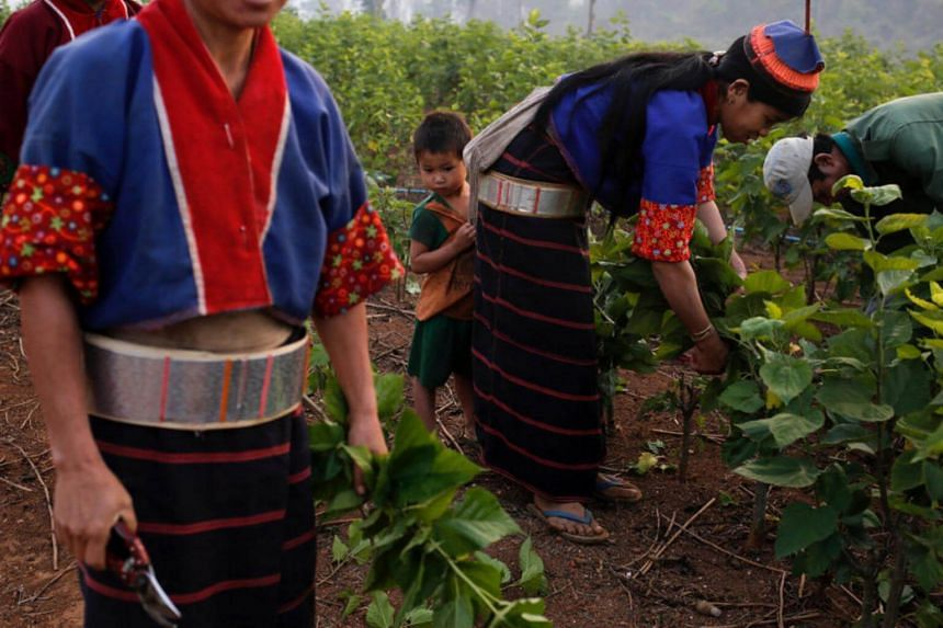 A Chinese company working with Myanmar farmers hopes that farming silkworms can help the farmers, and their country, quit opium production.