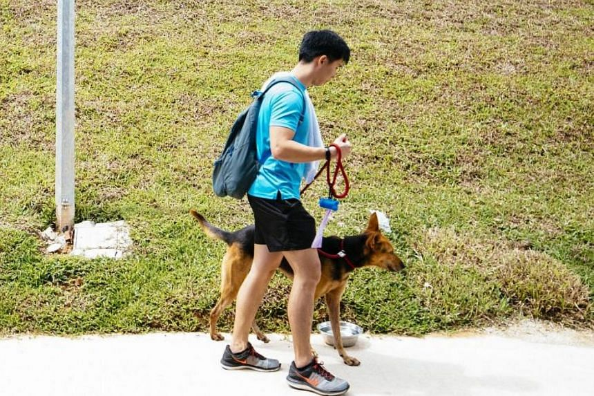 Dog owners have to inform authorities when they sold or if they give away their pets, and provide the particulars of the new owners.