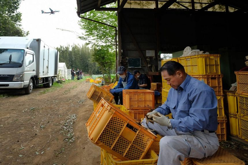 Japanese farmer Takao Shito (right) and his colleagues working on a farm encircled by Narita airport, Tokyo's main international gateway, in Chiba prefecture, on April 12, 2018.