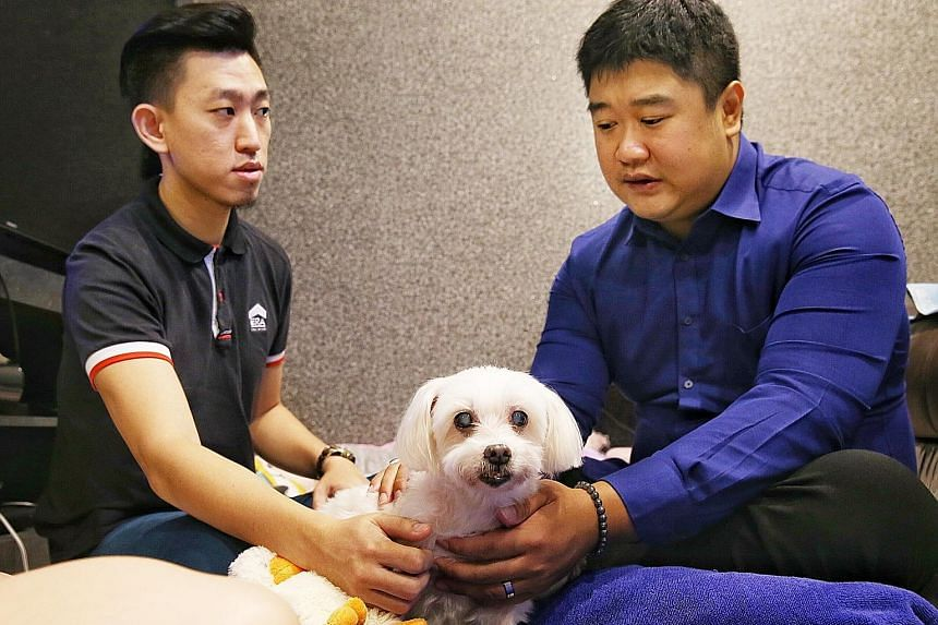 "Mr Ezekiel Ong (in blue) ""reading"" the mind of 15-year-old maltese dog Si Si, the pet of Mr Daryl Ng and his wife Sherlynn Ong. Ms Ong says he saved her dog's life by alerting her to its inflamed pancreas."