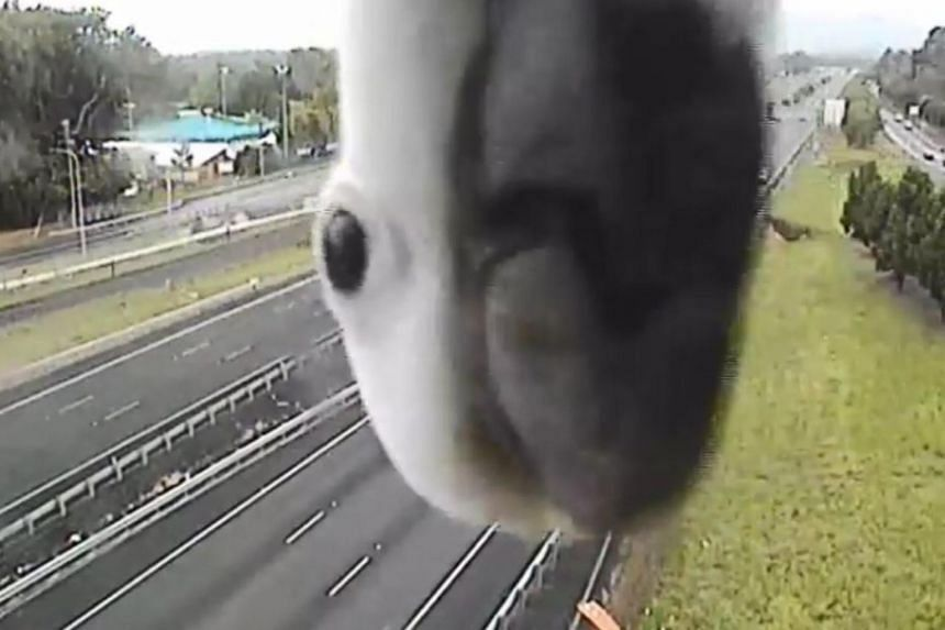 The traffic camera captured the white bird playfully poking around the lens before giving it a long stare with its beady, black eye.
