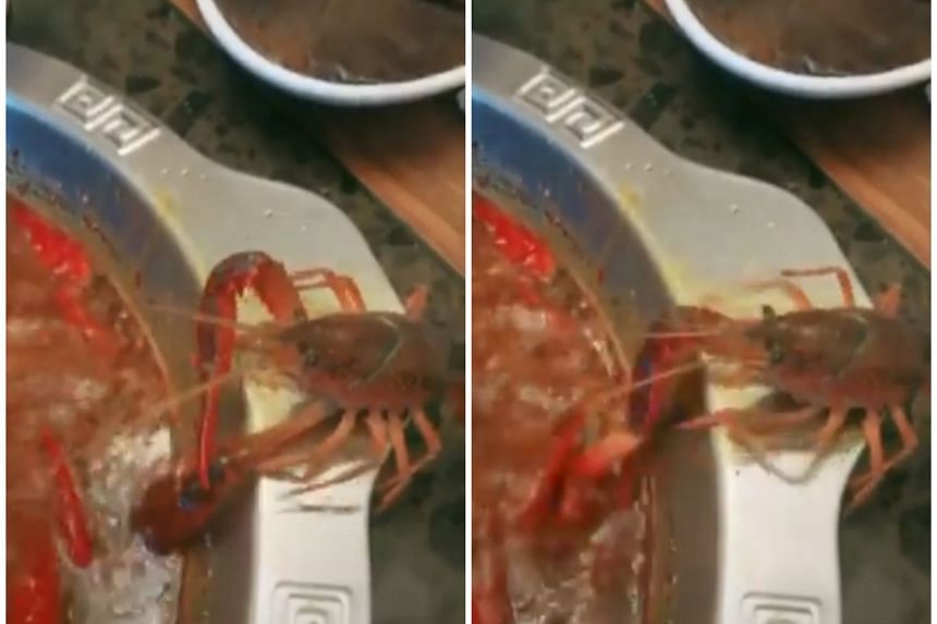 The viral clip showed the crayfish clambering out of the hotpot with one of its claws, presumably cooked from the boiling temperature of the soup, still inside.