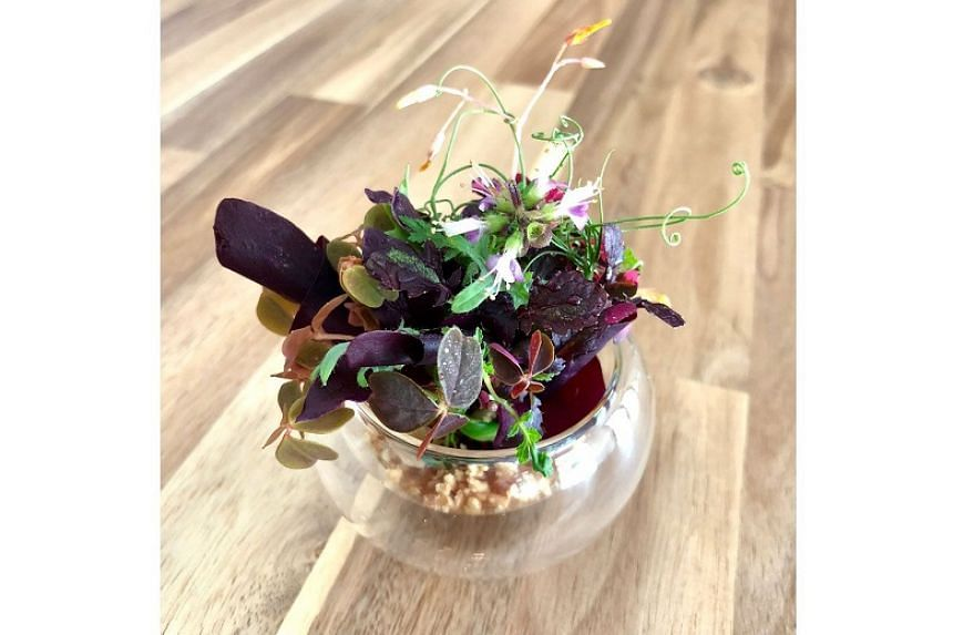 Microgreens in caramel and ground hazelnuts