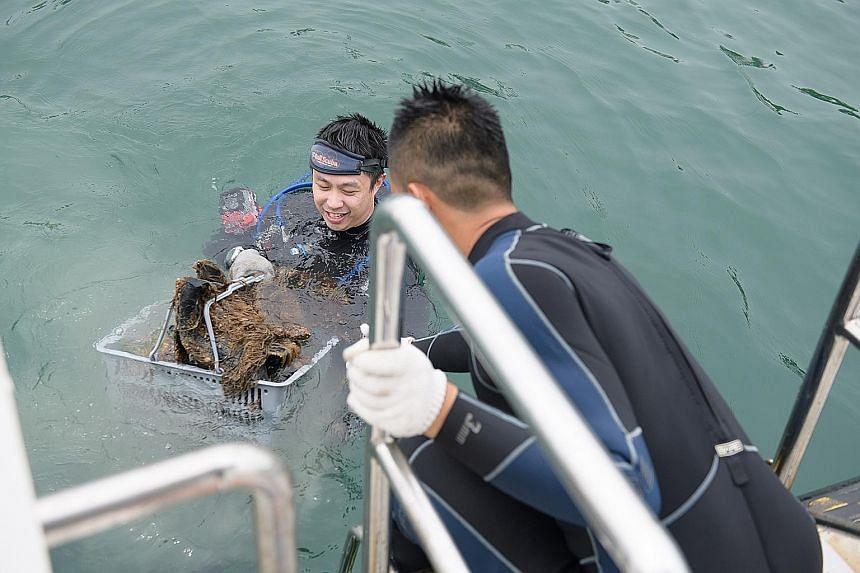 Volunteer divers sorting the debris collected off Raffles Lighthouse last Saturday to compile data that will be included in a global survey.