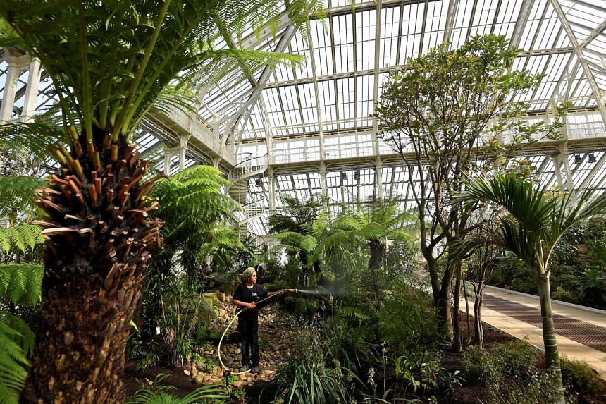 The Temperate House glasshouse (above), which dates back to 1863, has 10,000 plants (left and top), including some of the world's rarest and most threatened species.