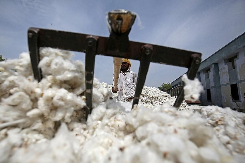 Many farmers in India, desperate to boost their incomes after poor yields, are planting an unapproved variety of cotton seeds.