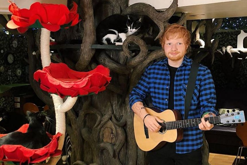 The figure of Ed Sheeran is dressed in a checked shirt, bears the singer's many tattoos and is holding a guitar - as the cafe's cats eat treats and play around the model.