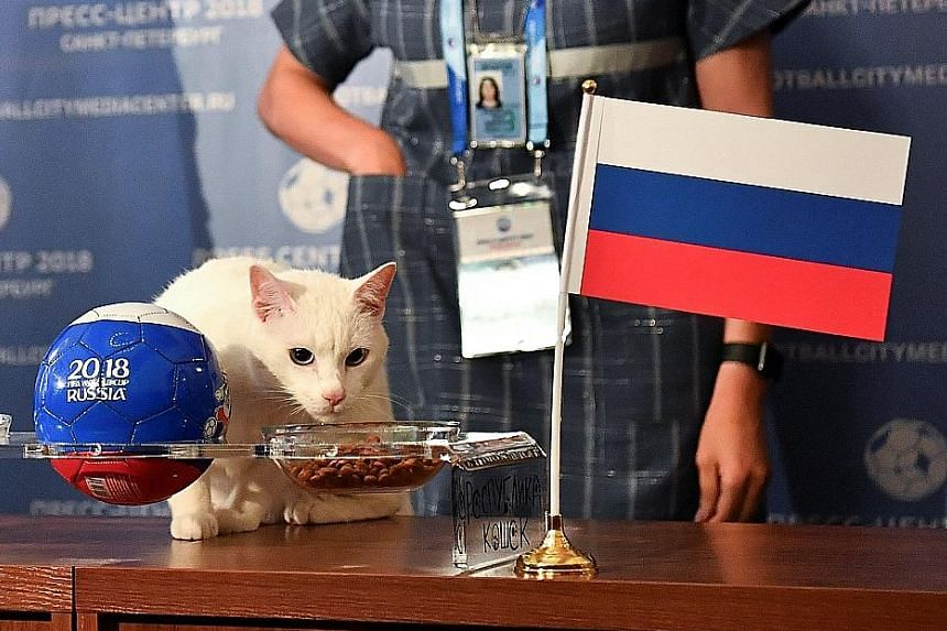 Achilles the cat, who lives in St Petersburg's Hermitage Museum, choosing Russia to win the opening match of the World Cup, having previously predicted outcomes during the 2017 Confederations Cup.