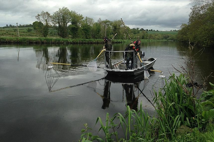 The Munster Blackwater River, in Ireland, is largely unimpacted by man-made structures. But some other rivers in Europe are under threat from small barriers, such as dams and dykes, leading to a decline in fish stocks.