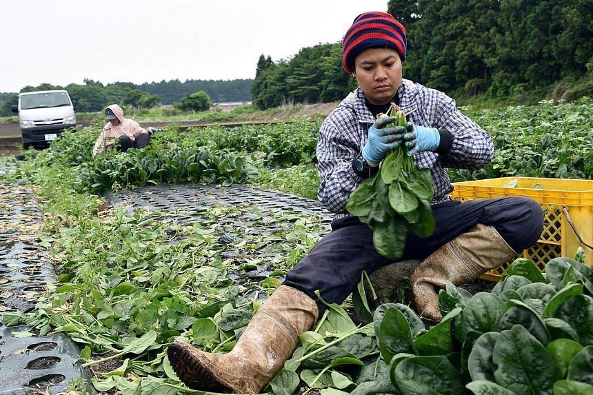 Workers from Thailand at Green Leaf farm in Japan's Gunma prefecture. Farmer Shouji Sawaura says he relies on 24 workers from Thailand and Vietnam who operate machinery in a factory that makes pickles and noodles.