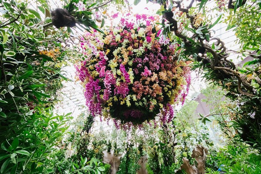 The Singapore Garden Festival 2018 will feature magical fantasy gardens, inspirational show gardens, exquisite floral displays and an orchid extravaganza (above).