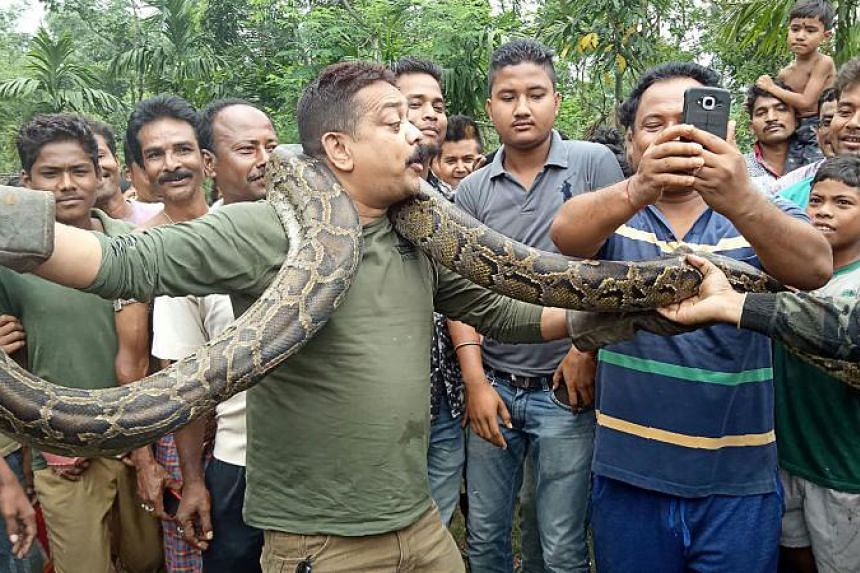 Wildlife officer Sanjay Dutta was called by frantic villagers in West Bengal after they saw the 40kg python swallowing a goat alive.