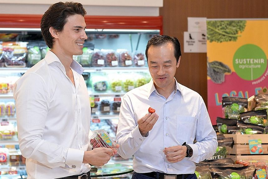 Above: Sustenir Agriculture CEO Benjamin Swan offering Dr Koh Poh Koon a taste of locally-grown strawberries, which are on sale at $12 a punnet.