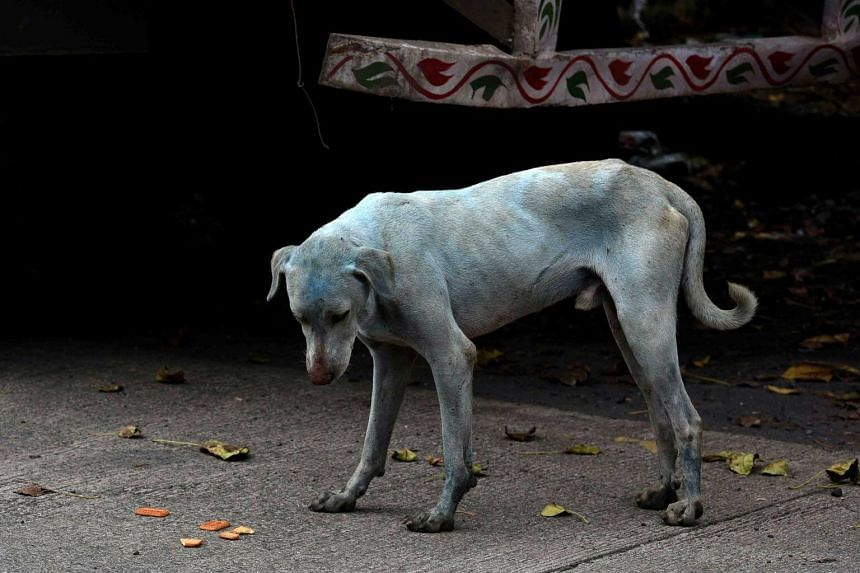 Dog meat has long been a part of South Korean cuisine, with about one million dogs believed to be eaten annually.