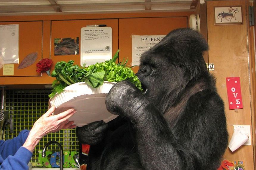 The Gorilla Foundation said Koko touched the lives of millions as an icon for inter-species communication and empathy.