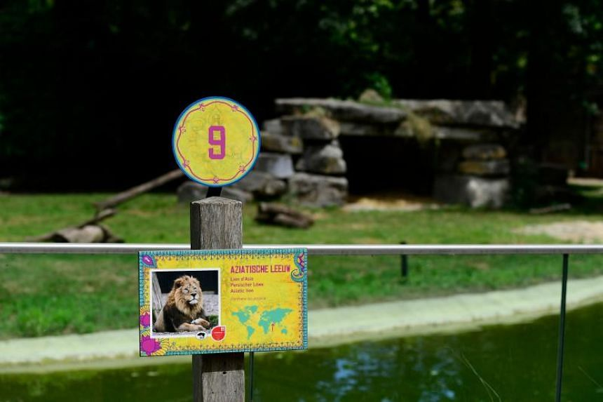 A sign is seen in front of the enclosure of Asian lions, after a young lioness escaped from its enclosure into a service corridor, at the animal park Planckendael in Muizen, near Mechelen, on June 21, 2018.