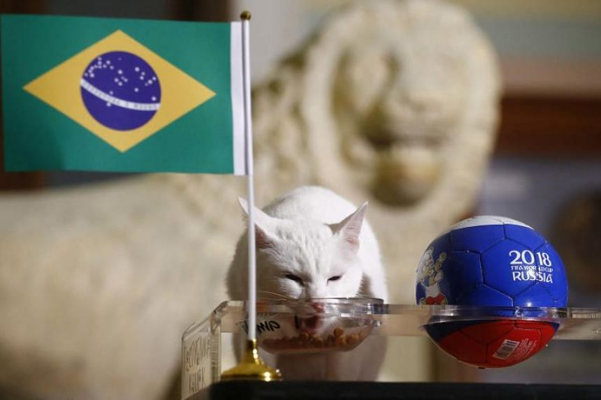 Offered a choice of two bowls of food, Achilles chose the one with the Brazilian flag.