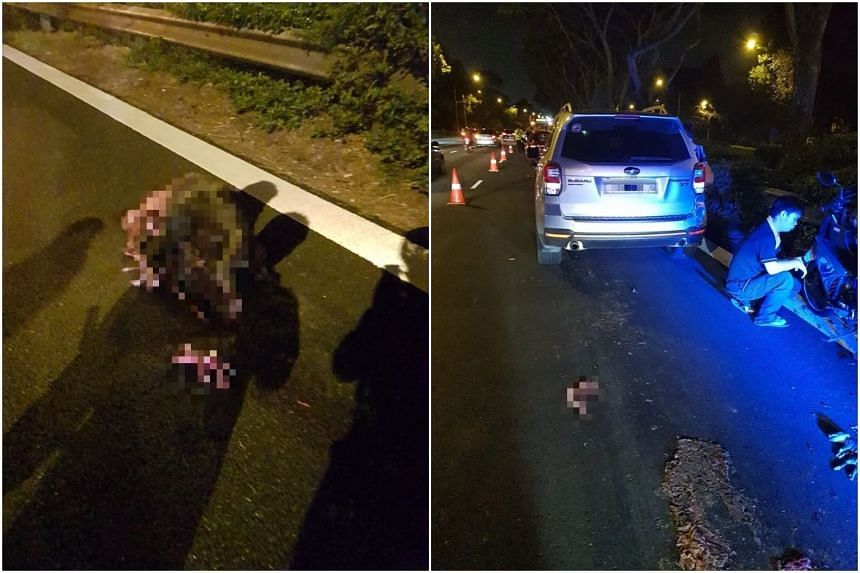 Facebook user Alex Soo posted photos of the aftermath which showed the dead animal lying on the road. The bodies of several of its babies were also seen nearby.