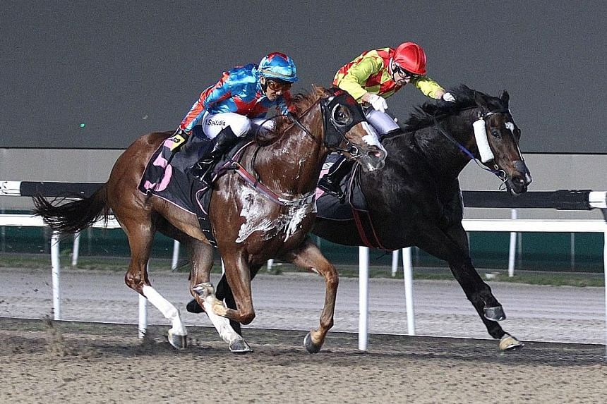 Natural Impulse (No. 5) fending off the $14 favourite Lonhro Gold to score his sixth victory with jockey Saifudin Ismail astride in Race 3 at Kranji last night.