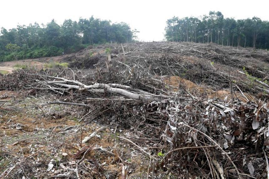 Concerns about the amount of forests and peat lands cleared for plantations have plagued the palm oil industry for years.