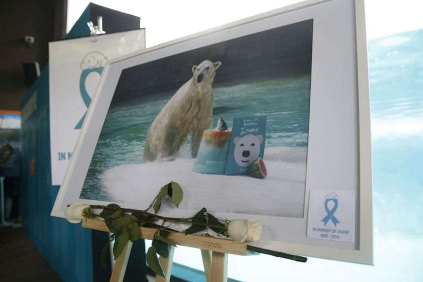 A private tribute ceremony for Inuka, the first and only polar bear born in Singapore, was held at the Singapore Zoo on April 26, 2018.