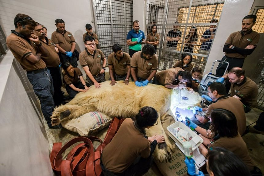 Inuka's caregivers, past and present, gathering around the polar bear on April 25, 2018, as the final injection was administered to relieve him of suffering.