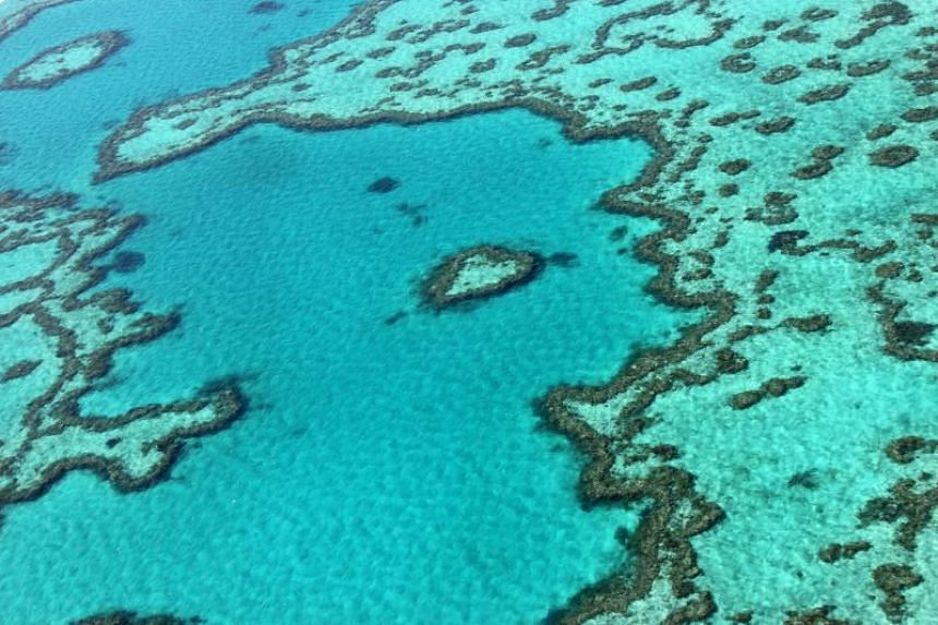 An aerial view of the Great Barrier Reef off the coast of the Whitsunday Islands, taken in 2014.