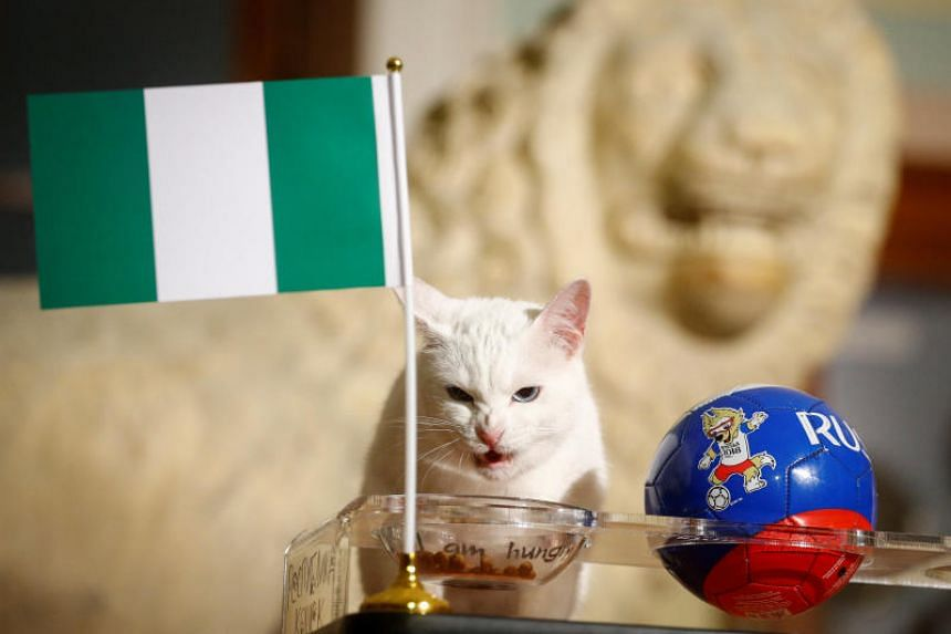 Achilles the clairvoyant cat predicted that Nigeria would win against Argentina in their final Group D match.