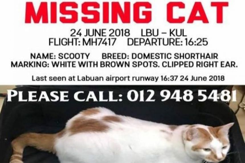 Kiran said his white cat with brown spots with a clipped right ear was last seen on the tarmac at 4.37pm on June 24, 2018.