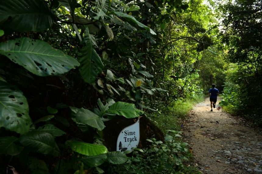 A jogger running along the Sime Track in the Central Catchment Nature Reserve.