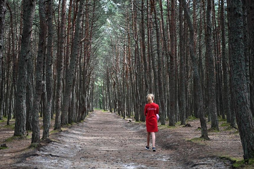 """From far left: Local fans cheering on Russia during their Group A match against Egypt against the backdrop of """"The Buried Robot"""". A woman taking a stroll through the """"Dancing Forest"""" or the """"Drunken forest"""", which is some 80km from Kaliningrad's city"""