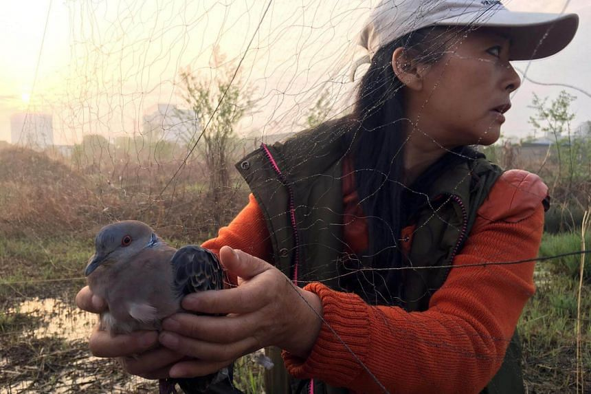 Bird conservationist Liu Yidan freeing a spotted dove from an illegal bird net erected in Yingdong county in Anhui province, China, on March 26, 2018.