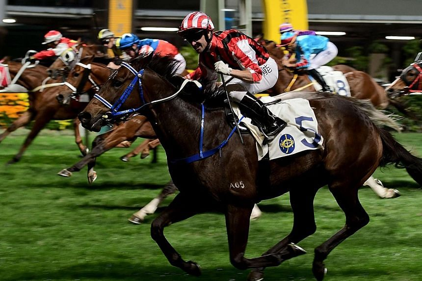 Sangria (foreground) is in great form and another win doesn't appear far away, especially when his is in not the strongest race at Sha Tin tomorrow and has no weight on his back.