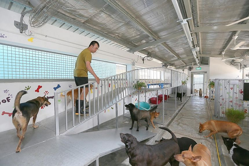 One of the units in the AVA's The Animal Lodge in Sungei Tengah. Some shelters had been operating rent-free in Pasir Ris and now face the prospect of forking out thousands of dollars each month at the new purpose-built facility.