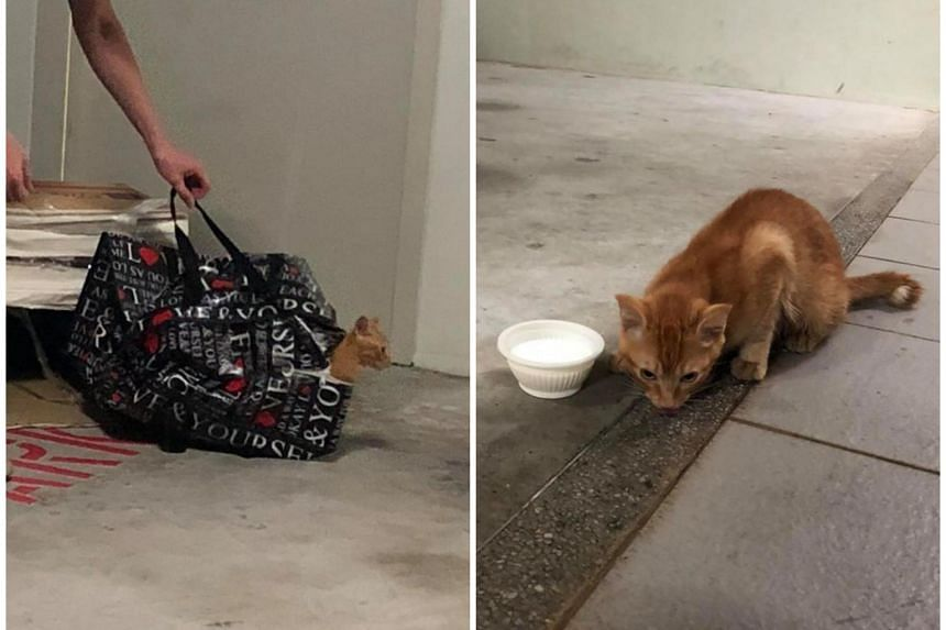 The kitten was found trapped inside a zipped bag placed inside a cardboard box at a carpark in Taman Jurong on June 23, 2018.